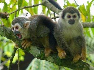 Ecuador Les Cedros Affen Volunteers