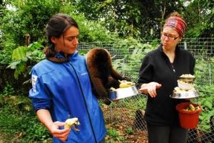 Die Volontäre kümmern sich um die in Not geratenen Affen