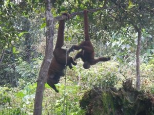 Mittlerweile leben 65 Affen auf Los Monos