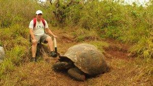 ecuador eco volunteer schildkroete galapagos