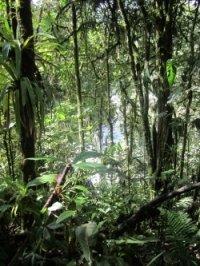 ecuador un poco del choco regenwald