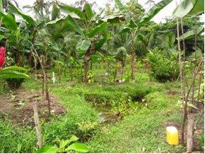 panama finca paradise found plantage