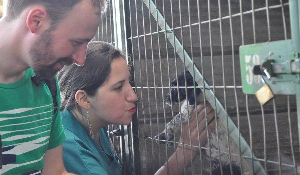 Christian in der Auffangstation für Straßentiere in Chile