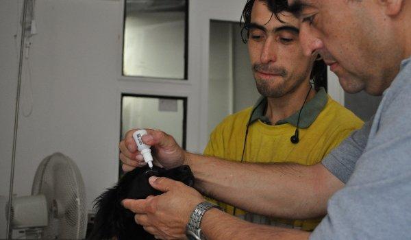 Tierarzt in der Auffangstation in Santiago