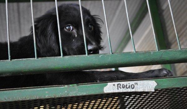 Hund in der Auffangstation in Santiago