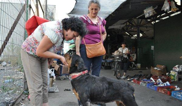 Straßenhund am Mercado Vega
