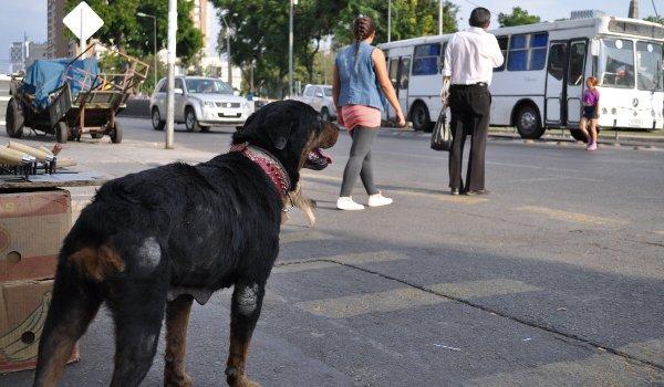 Straßenhunde-Projekt Chile.