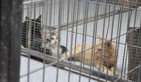 Kranke Katzen in einer Tierklinik in Santiago.