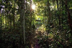 Beim Regenwald-Projekt bist du von Regenwald umgeben.