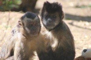 suedafrika-rettungsstation-affen-liebe