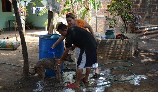 strassenhunde-nicaragua