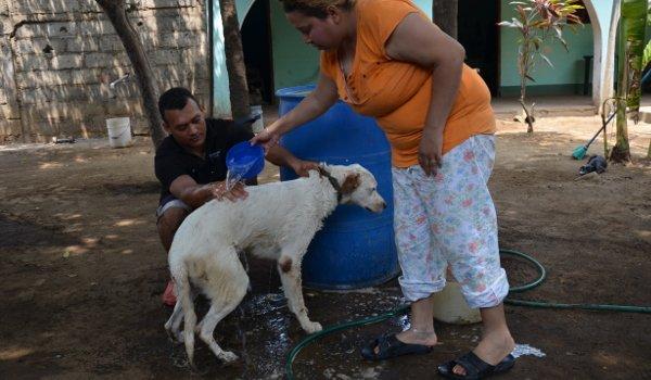 strassenhunde-nicaragua7