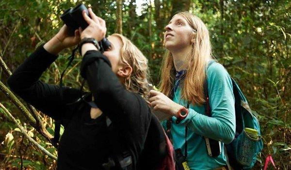 Junge Menschen leisten Freiwilligenarbeit im Regenwald